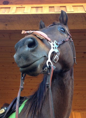 I know, I make this hackamore look good.