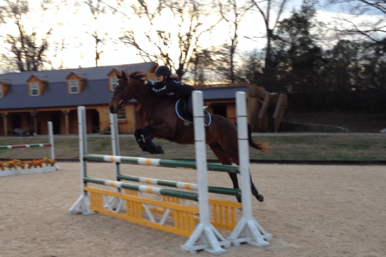 Jumping and oxer at 3 feet and 9 inches!