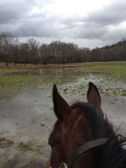 "Yep, that's my ""lake."" I really hate all this rain!"