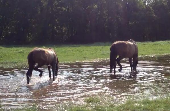 Splashing around in the puddle last summer...