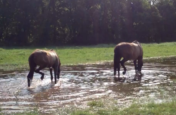 Splashing around in the puddle last summer...