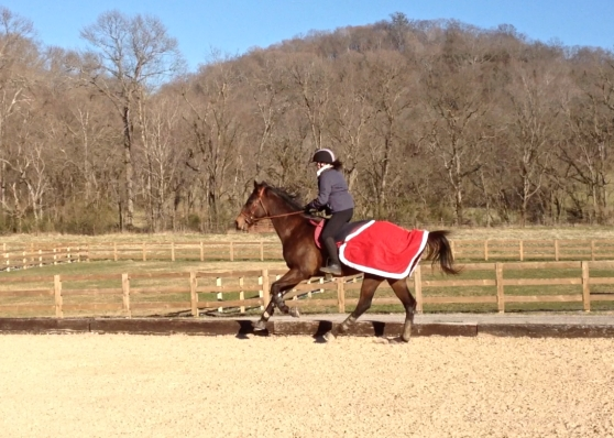 Extending the canter, but not quite galloping...