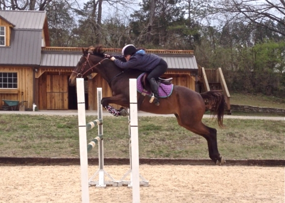 Woo hoo! Jumping a course at 4'3!