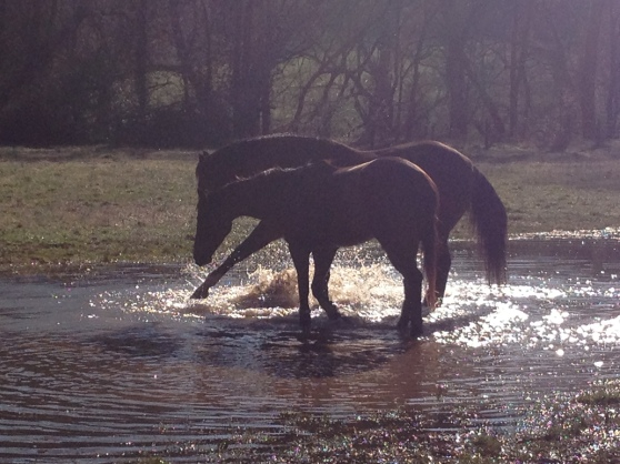 Splashing with my best friend, Leo!