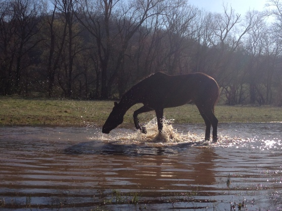 I love splashing in puddles!