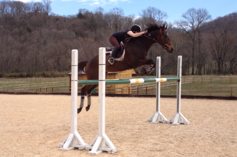An oxer set to 4'4...