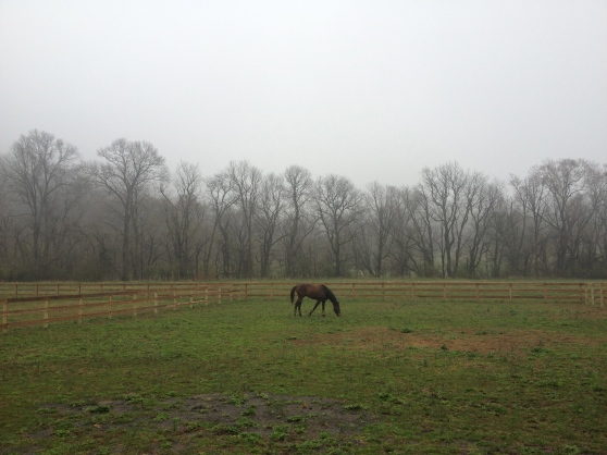 These little paddocks are too... little. There's no way I can gallop in here!