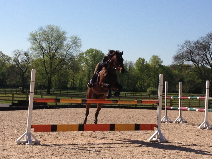 Jumping into the two-stride line at four feet high!