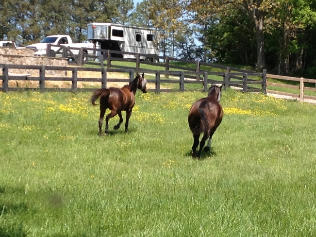 My last time running and playing in the paddock with Leo!
