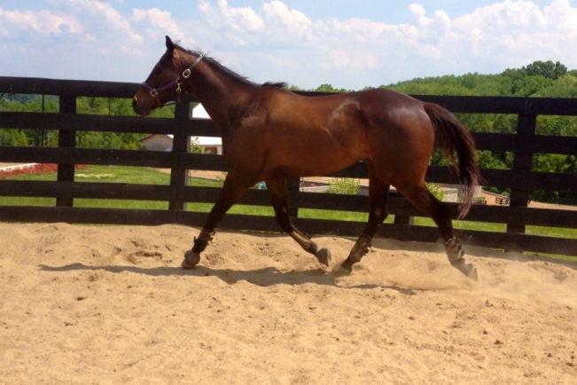 Trotting in the round pen!