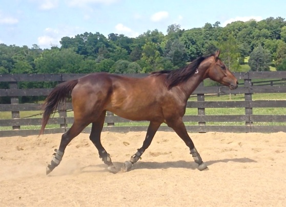 Stretching it out at the trot..