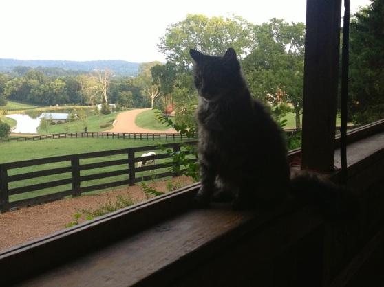 That's Rocky the Kitty, my best friend.