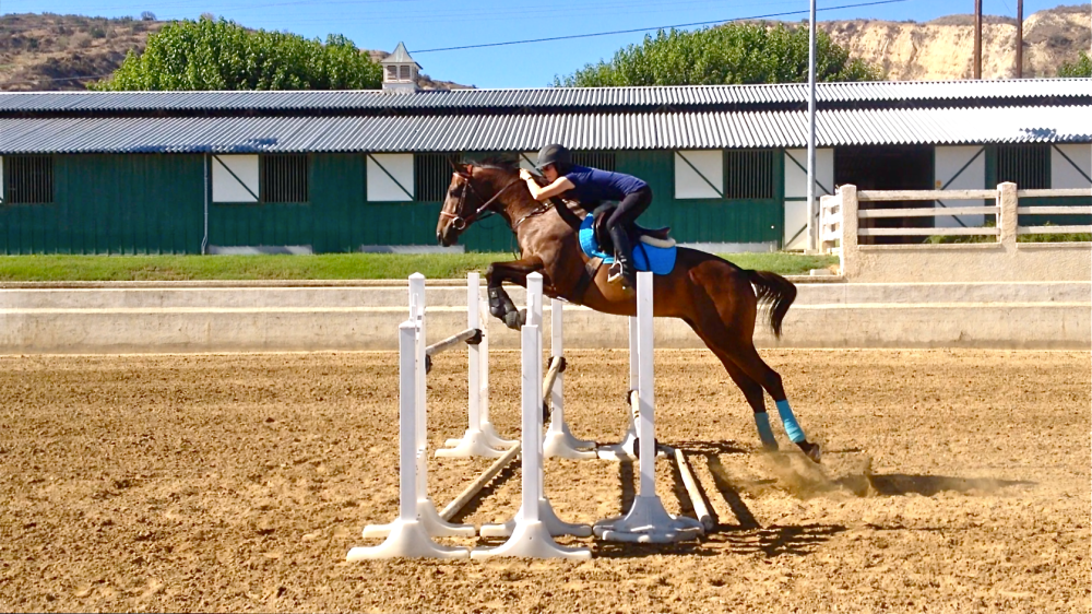 3'6 oxer with a 4'9 spread